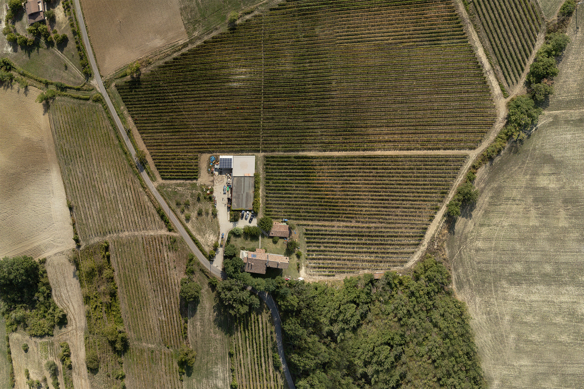 foto aerea vigneti i carpini